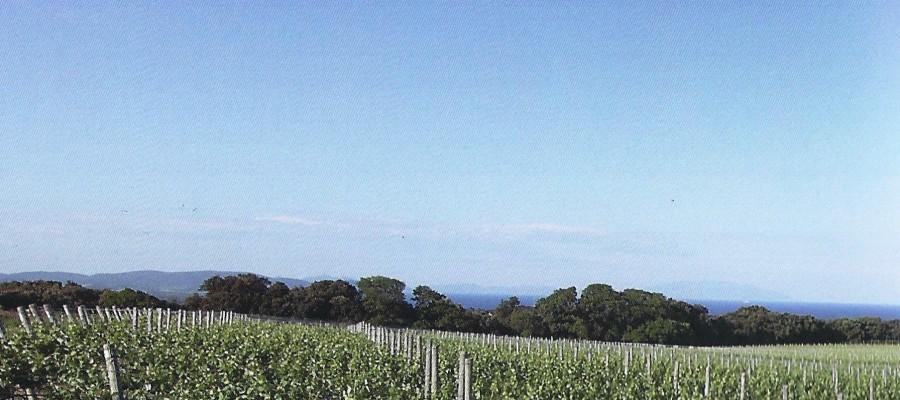 Quindici ragazzi partecipano ad un corso di formazione in viticoltura